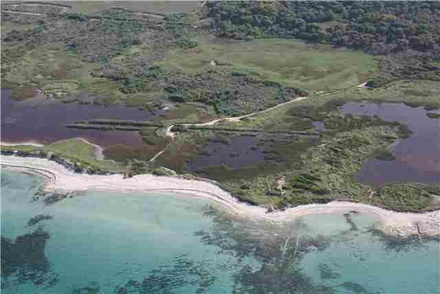 oasi-cesine