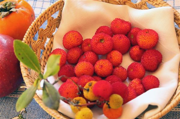 frutti del salento